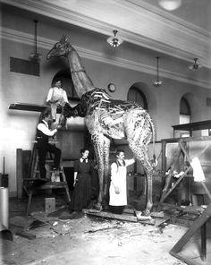 Giraffe taxidermy. Image credit: Carnegie Museum of Natural History.