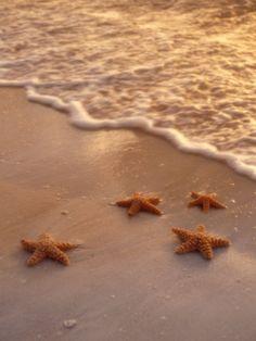 Starfish on Sand Photographic Print Cream Aesthetic, Boho Aesthetic, Orange Aesthetic, Aesthetic Colors, Aesthetic Images, Aesthetic Collage, Summer Aesthetic, Aesthetic Backgrounds, Aesthetic Vintage