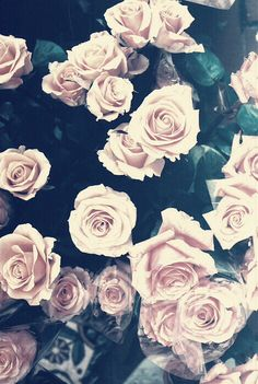 Roses Pastel Grunge Indie Background for iPhone.