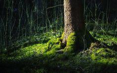 Fond d'écran hd : forêt