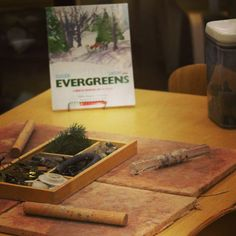 A lovely winter provocation. Exploring evergreens with clay, evergreen twigs, loose parts, and nonfiction books about evergreens. Science Area Preschool, Preschool Art Activities, Winter Activities, Preschool Winter, Fairy Dust Teaching, Christmas Clay, Xmas, Kids Daycare, Winter Fun