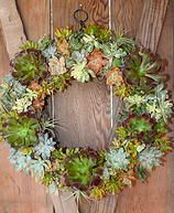 Windmill Floral and Garden Succulent Designs