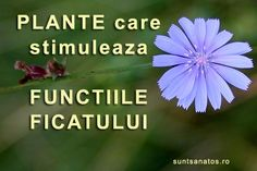 functiile ficatului Ayurveda, Apothecary, Health, Fitness, Medicine, Remedies, Plant, Health Care, Pharmacy