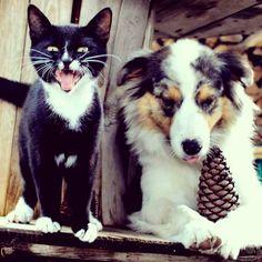 Saturday's with my cat & Eef  #eeftheaustralianshepherd #eefmodeldog #australianshepherd #outdoorliving #saturday