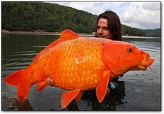 This goldfish looks like it's a crappy rubber movie prop. It's alive, however, and was caught by a French fisherman.