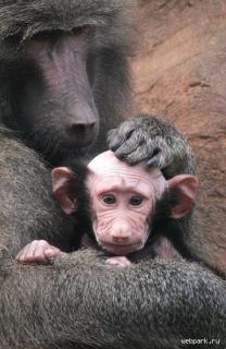 Upside down monkey swing sex