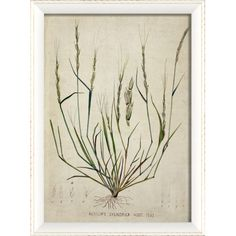 Equally at home in an artful collage or on its own as an eye-catching focal point, this bold framed print features a sketch of wild grass.