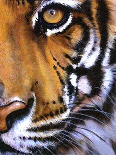 stunning life-like painting of a tiger Tiger Artwork, Tiger Painting, Painting & Drawing, Animal Paintings, Animal Drawings, Art Drawings, Horse Drawings, Diy Canvas Art, Canvas Artwork