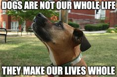 Dogs do make our lives whole! Click the image and help a rescue dog!