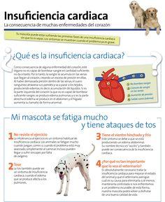 La insuficiencia cardiaca en perros. #corazón Yorkies, Happy Animals, Animals And Pets, Living With Dogs, Pet Vet, Pet Life, Working Dogs, Pet Health, Dog Care
