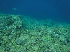 Κοραλλιογενείς Ύφαλοι, Okinawa