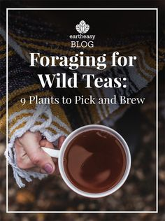 Foraging for Wild Teas: 9 Plants to Pick and Brew