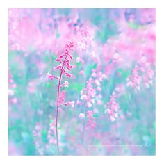 scent. by impatienss