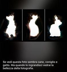 Guarda l'immagine..metafora tra apparenza e sostanza ..al primo sguardo vedi un cane un gatto e un coniglio..guarda bene e ingrandisci le parti in ombra...vdrai la gioia la tenerezza e l'amore... Beautiful Moments, Beautiful Images, Rare Words, Romantic Pictures, Choose Life, Tumblr, Love And Respect, Photo Manipulation, Illusions