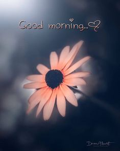 Morning Love, Good Morning Greetings, Good Morning Wishes, Good Morning Images, Good Morning Quotes, Fm Cosmetics, Good Morning Animation, Good Morning Wallpaper, Work Quotes