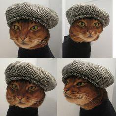Hipster kitty  jajajajaja