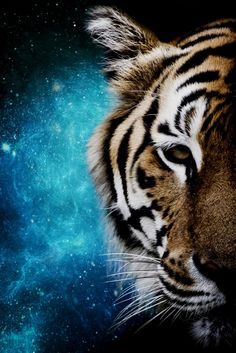 """Artwork """"Tiger Galaxy by Mateusz Slemp available on www. Big Tiger, Tiger Head, Tiger Cub, Nature Pictures, Animal Pictures, All Poster, Poster Prints, Tableau Design, Animal Posters"""