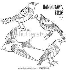 Black on white vector set of hand drawn birds