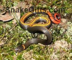 587 Best Snake Photos images in 2019 | Snake photos, Snakes, Snake