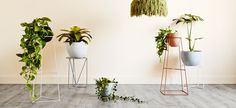 loving these geometric and minimal plant stands from Ivy Muse