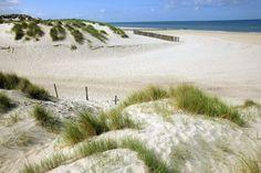 Dunes à Berck-sur-Mer,Nord-Pas de Calais. La Côte d'Opale