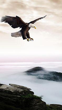 ASAS de águia H5 background Eagle Background, Iphone Background Images, Black Background Images, Lion Live Wallpaper, Eagle Wallpaper, Eagle Images, Eagle Pictures, Blur Background Photography, Nature Photography