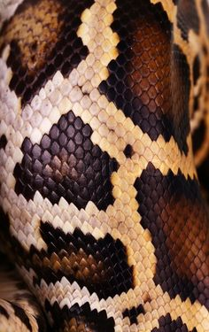 New Skin Art Textiles Inspiration Ideas Snake Drawing, Snake Art, Manga Drawing, Snake Patterns, Snake Skin Pattern, Patterns In Nature, Textures Patterns, Animal Print Wallpaper, Snake Wallpaper