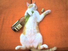 pussycat wine, drunk cat