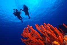 Riviera Nayarit: paraíso subaquático para praticantes de mergulho - Embarque na Viagem http://www.embarquenaviagem.com/2016/08/11/riviera-nayarit-paraiso-subaquatico-para-praticantes-de-mergulho/