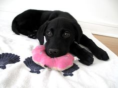 black lab puppy lol :)