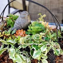 Make a patio table centerpiece with a wire basket and a few succulent cuttings from around the yard...easy and pretty.