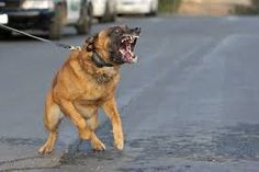 Bildergebnis für aufreiten hund