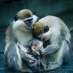 Baby, don't talk to stranger (Mono / Monkey)