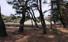 Beholder DS1 at A Pine Forest around the Three Royal Tombs, Gyeongju, KO...