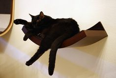 Urban Pet Haus Wave Perches Available for Pre-order With Special Discount|moderncat :: cat products, cat toys, cat furniture, and more…all with modern style