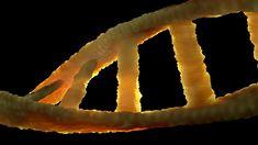 Free Image on Pixabay - Dna, Dns, Biology, Genetic Material Ginkgo, Doctors Day, Schizophrenia, Folic Acid, Nanotechnology, Neuroscience, Neuroplasticity, Alzheimers, Tool Design