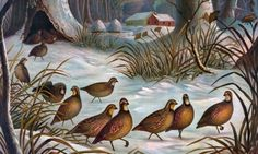 Birds In Snow Jigsaw Puzzle - Click to play now!  #jigsawpuzzle