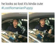 lost romanian puppy ☺☺☺