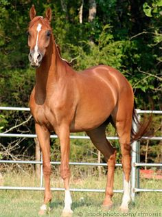 horse - found one just like this out by our mailbox one day....