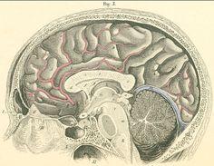 La neurociencia advierte que estamos diseñados para disfrutar el arte. http://www.farmaciafrancesa.com
