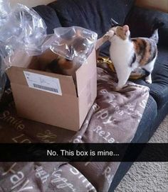 Funny Animal Picture Dump Of The Day 24 Pics http://ibeebz.com