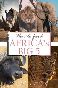 Where to find Africa's Big Five - The Solivagant Soul African Vacation, Lion Africa, All About Africa, Herd Of Elephants, Visit South Africa, Spotted Animals, Animal Experiences, Africa Destinations