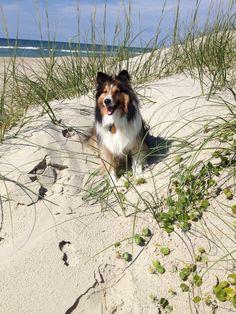 Dune Dog.  Cathie Pearson
