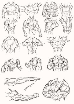 Anatomy Drawing Tutorial Male Torso Anatomy 2012 by Juggertha - Human Figure Drawing, Figure Drawing Reference, Body Drawing, Anatomy Reference, Art Reference Poses, Hand Reference, Drawing Muscles, Drawing Hair, Gesture Drawing
