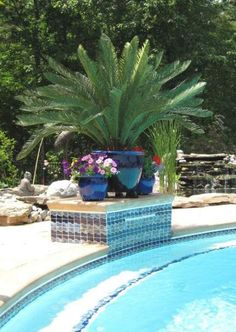 Custom builder of Outdoor Artificial Palm Trees for commercial and residential use. Each artificial outdoor palm tree has a lush canopy full of durable artificial palm leaves. Unlike other fake palm trees our artificial palms are made from real bark. Plants Around Pool, Landscaping Around Pool, Palm Trees Landscaping, Pool Plants, Outdoor Plants, Backyard Landscaping, Tropical Landscaping, Backyard Patio, Backyard Ideas