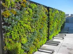 Awesome vertical wall of plants :)