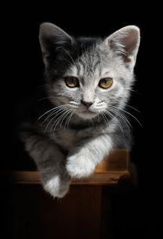 #Cats, #Gatos