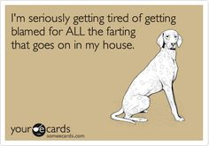I'm seriously getting tired of getting blamed for ALL the farting that goes on in my house.