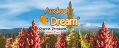Andean Dream Quinoa Spaghetti The highest compliment we could pay to this rice flour and quinoa–based noodle: This could be real pasta. Corn Pasta, Rice Pasta, Pasta Dishes, Quinoa Cookies, Coconut Cookies, Nut Free, Dairy Free, Gluten Free Brands, Quinoa Benefits