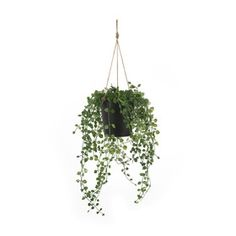 Create a natural and refreshing ambience by hanging this artificial potted plant in your living space. Ivy Plants, Potted Plants, Pink Side Plates, Faux Grass, Touch Lamp, Garden Gazebo, Hanging Pots, Reno, Artificial Plants